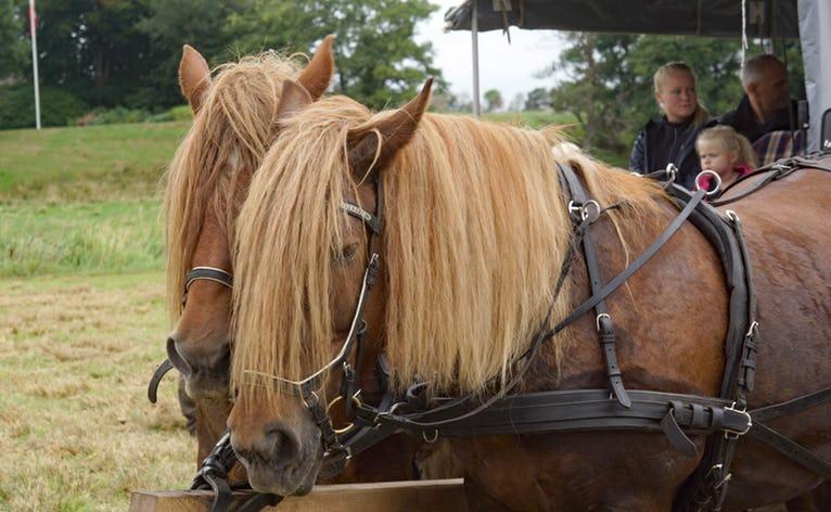 Tag en hestevogn mellem de forskellige aktiviteter i og omkring Hodde