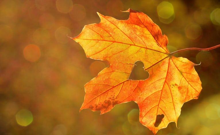 Efteråret er over os og sognearkivet indbyder til møde
